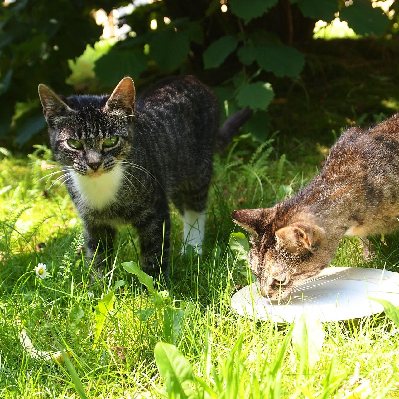 Mléko pro kočky není úplně vhodné