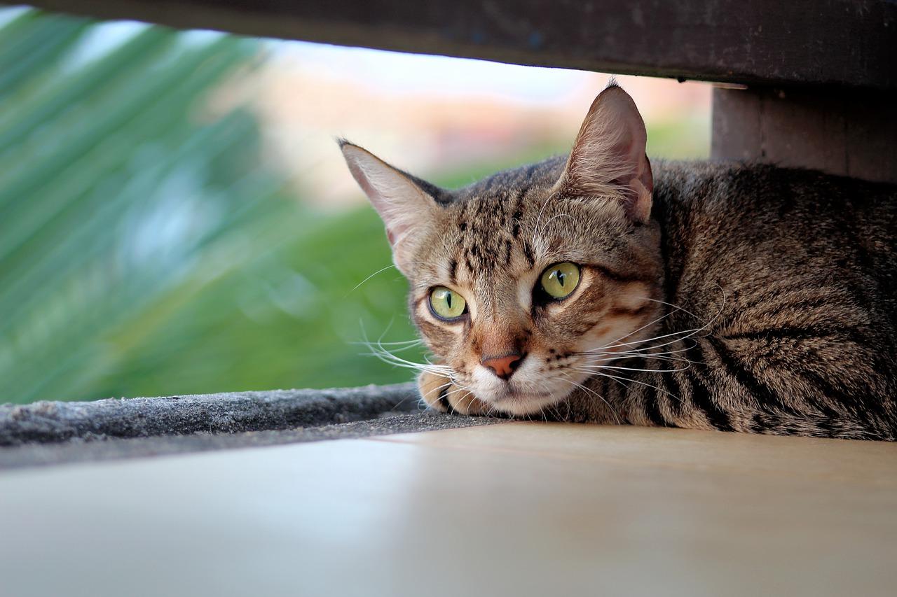 všechny těsné kočička